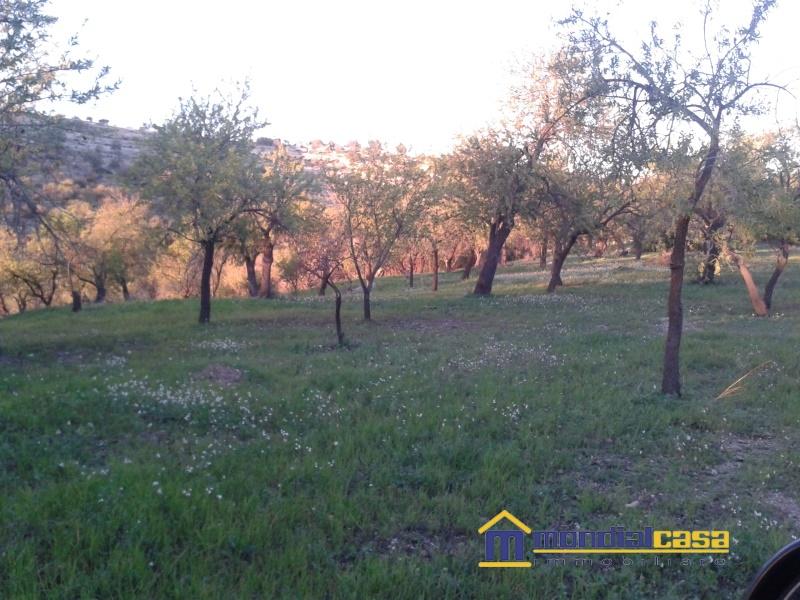 Azienda Agricola in vendita a Avola, 1 locali, prezzo € 8.812 | Cambio Casa.it