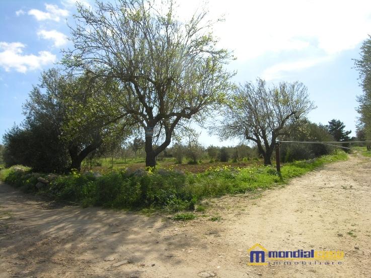 Azienda Agricola in vendita a Pachino, 9999 locali, prezzo € 28.000   CambioCasa.it